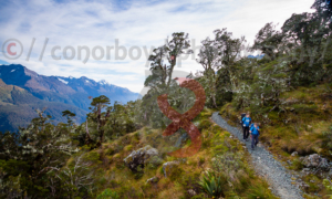 Above the Hollyford on the way to Earland Falls
